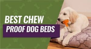 Top Rated Chew Proof Dog Beds
