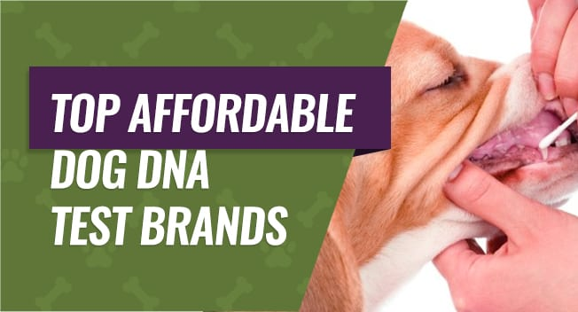 Affordable Dog DNA Test Brands