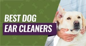 Best Dog Ear Cleaners on the Market
