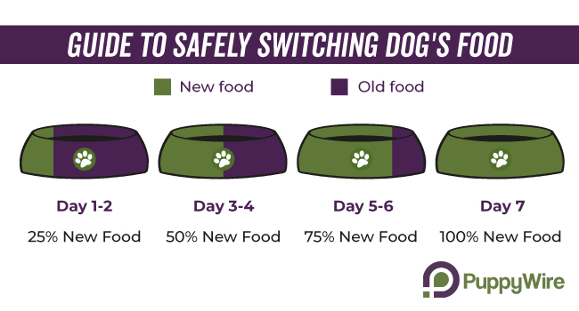 Dog Food Transition Guide