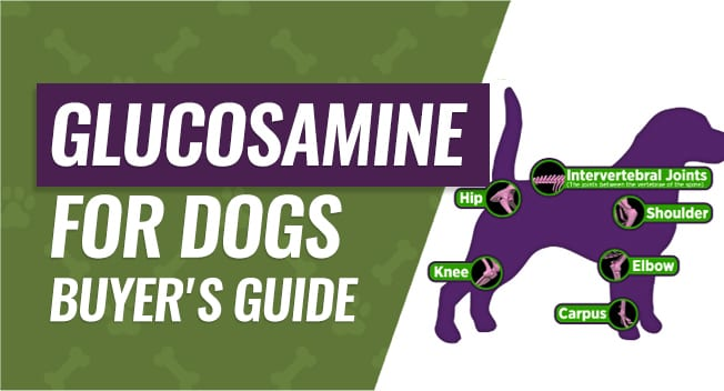 Canine Glucosamine Joint Supplement Buyer's Guide