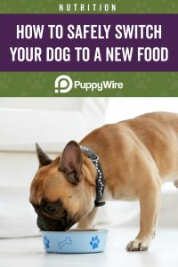 How to Safely Switch Your Dog to a New Food