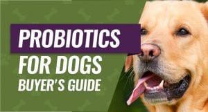 Canine Probiotic Buyer's Guide