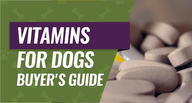 Vitamins for Dogs Buyer's Guide