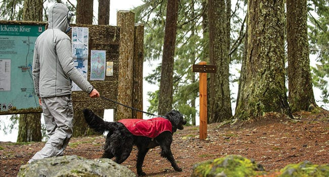 Dog hiking while wearing a rain jacket