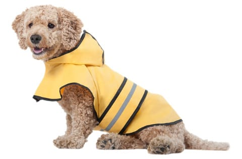 Rainy Days Slicker Yellow Dog Raincoat