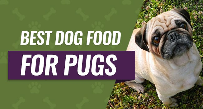 best food for pug puppies best dog food for pugs top 6 recommended reviews 4744