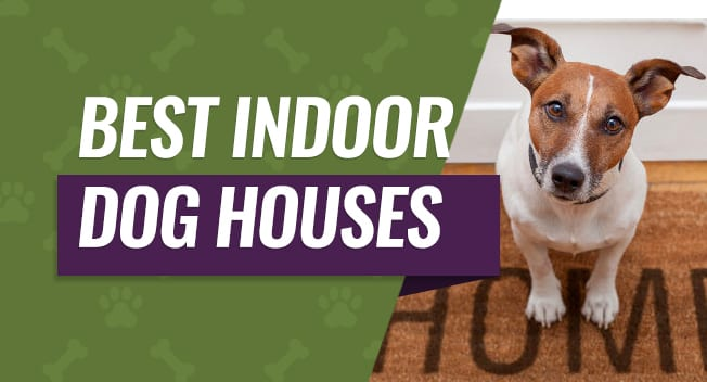 Best Indoor Dog Houses