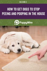 How to get dogs to stop peeing and pooping in the house