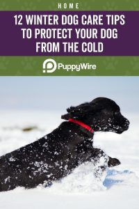 12 Winter Dog Care Tips to Protect Your Dog From the Cold