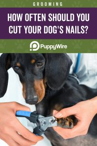 How often should you cut your dog's nails?