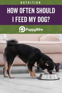 How Often Should I Feed My Dog?
