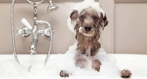 Dog taking a bubble bath after getting really dirty
