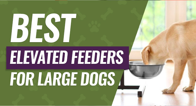Best rated elevated feeders for large dogs