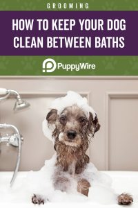 How to Keep Your Dog Clean Between Baths Pinterest image