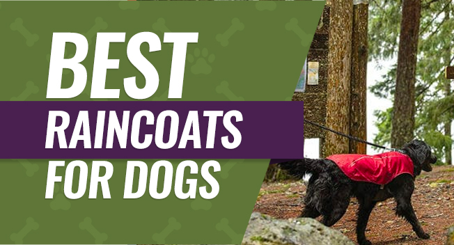 Top rated raincoats for dogs