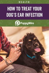 How to Treat Dog Ear Infections at Home Without the Vet