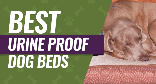 Top rated urine proof dog beds