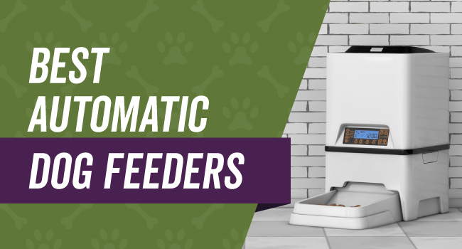 Top rated automatic dog feeders