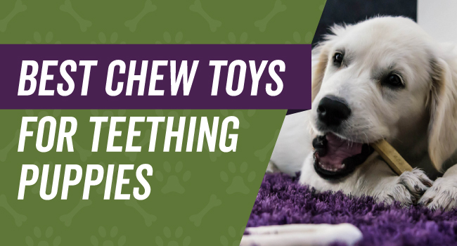 Chew toys to keep teething puppies busy
