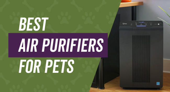 best dog air purifier
