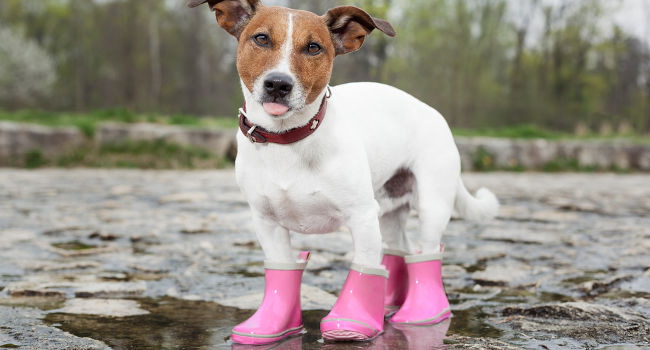 Dog boots that stay on in the rain