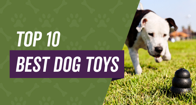 Top 10 Dog Toys