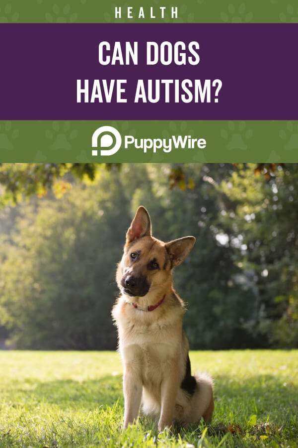Can Dogs Have Autism?