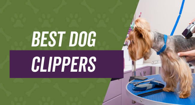 Best Rated Dog Clippers for Professionals and at Home