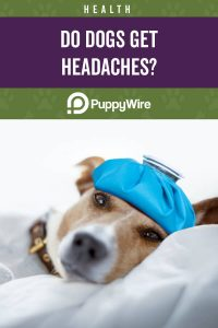Do dogs get headaches?