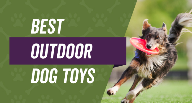 Top Rated Outdoor Dog Toys