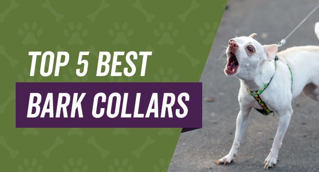 Top 5 bark collars