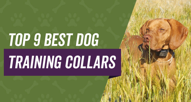 Top 9 best dog training collars