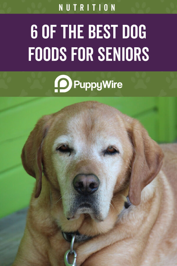 Best Senior Dog Food