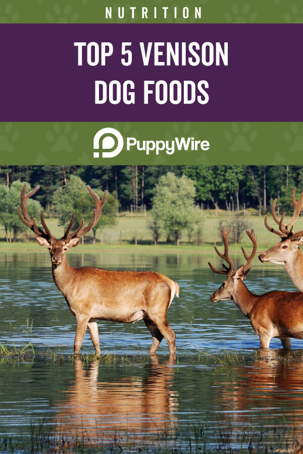 Best Venison Dog Food