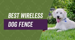 Wireless dog fences