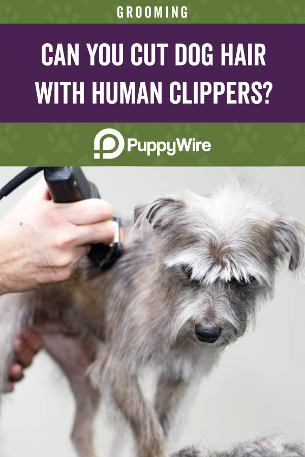 Can You Cut Dog Hair With Human Clippers?