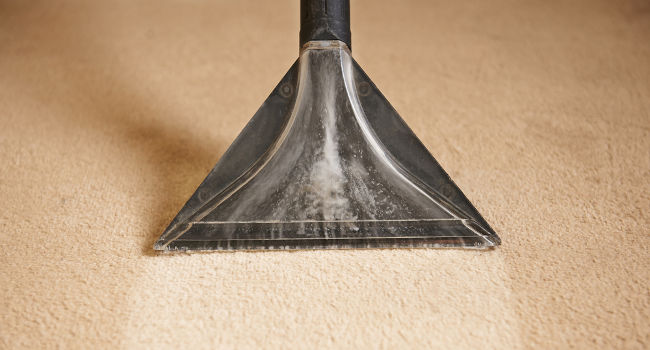 Carpet cleaner cleaning dirty pet stains from carpet