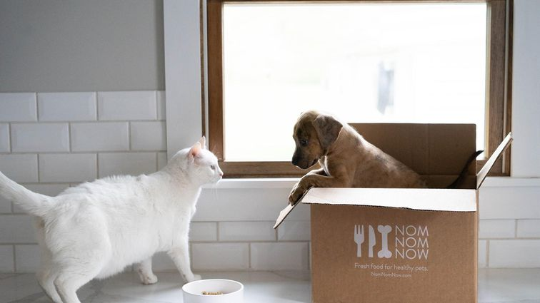 NomNomNow delivery box with dog and cat