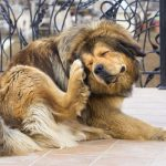 dog scratching his head