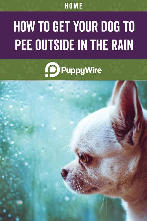 How to Get Your Dog to Pee Outside in the Rain