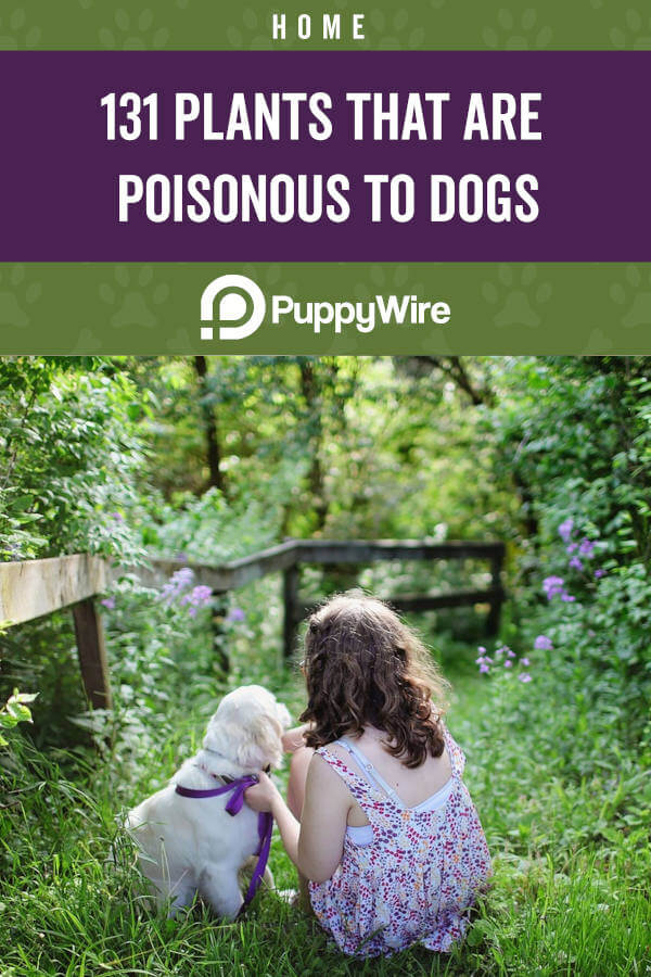 131 Poisonous Plants for Dogs
