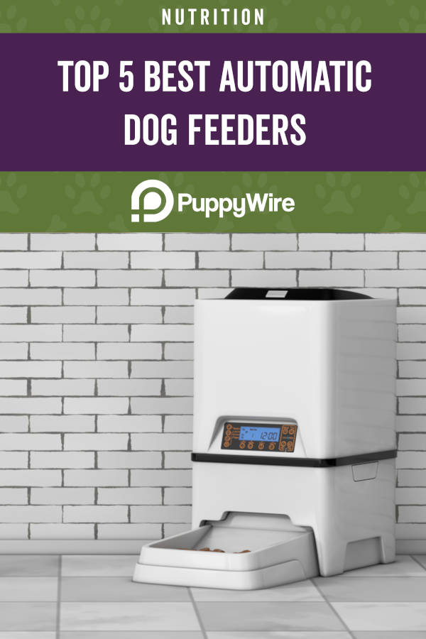 Top 5 Best Automatic Dog Feeders