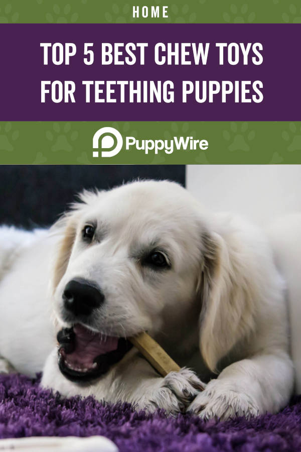 Top 5 Best Chew Toys for Teething Puppies