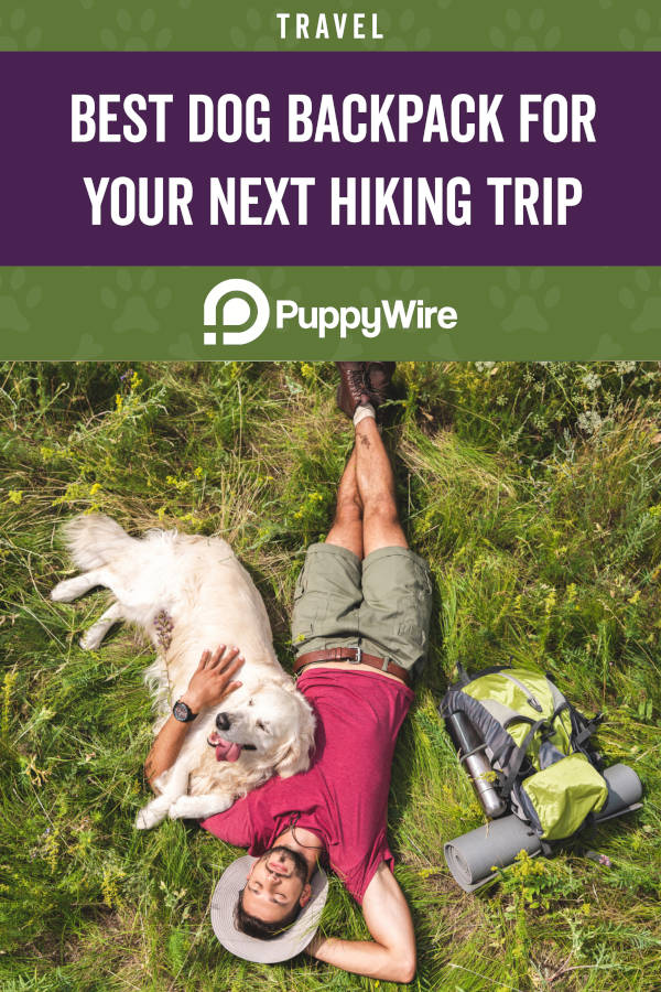 Best Dog Backpack for Your Next Hiking Trip