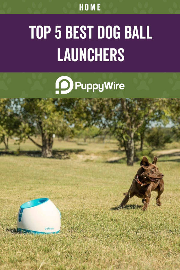 Top 5 Best Dog Ball Launchers