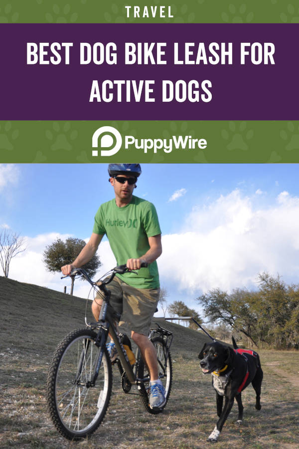 Best Dog Bike Leash for Active Dogs