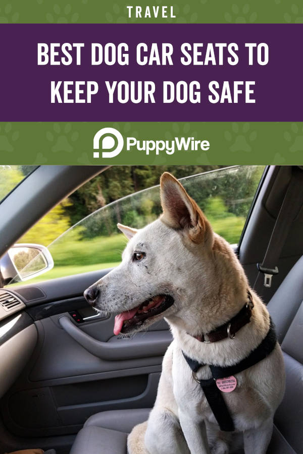 Best Dog Car Seats to Keep Your Dog Safe