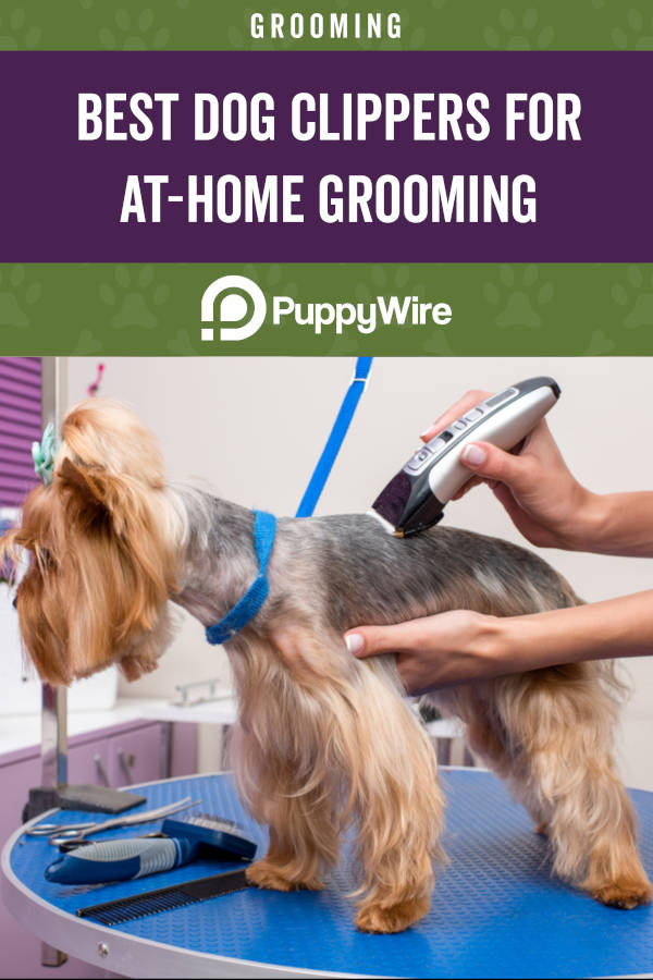 Best Dog Clippers for At-Home Grooming