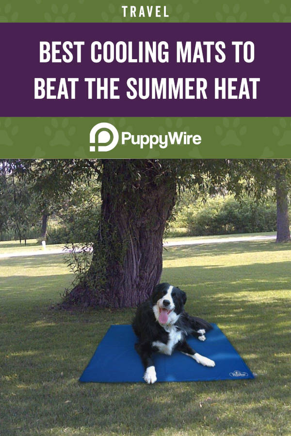 Best Dog Cooling Mat to Beat the Summer Heat